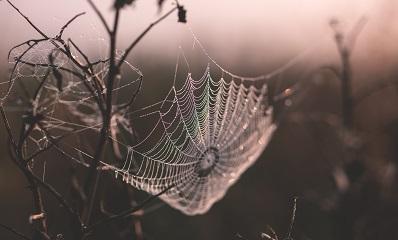 Bild eines dunklen Spinnennetzes